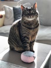 Yogakissen Spiel- & Schmusekissen für Katzen